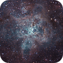 Tarantula Nebula - NGC2070,                                Hayden Purcell