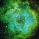 NGC2244 Rosette Nebula,                                Nick Davis