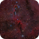 Elephant Trunk nebula - vdB 142,                                Alessandro Carrozzi