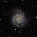 M74 Spiral Galaxy in Pisces,                                Dan Drew