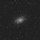 M33 - The Triangulum Galaxy,                                Rob Arkins