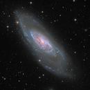 M106 / NGC 4258 & NGC 4248,                                Falk Schiel