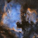 North American & Pelican Nebulae,                                Poochpa