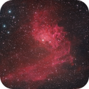 Flaming Star Nebula in HA + SII,                                Tristan Campbell