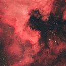 NGC 7000,                                Nicolas PUIG
