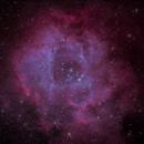 NGC 2244 - Rosette Nebula,                                Pete Bouras