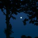 Rising Moon,                                AC1000
