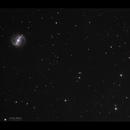 NGC 4314 & NGC 4274,                                Göran Nilsson