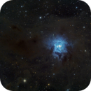 NGC7023 - Iris Nebula,                                Elvie1