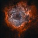 Rosette Nebula  Caldwell 49,                                Jian Yuan Peng