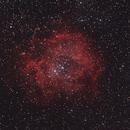 Rosette  Nebula / Caldwell 49 / NGC 2244,                                deppski