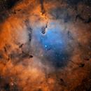 IC1396,                                Matthew Enrietta