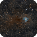 NGC7023 - A Widefield of the Iris Nebula,                                Frank Rogin