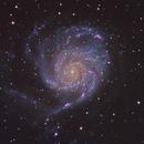M101,                                Joe Alexander