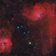Flaming Star and Tadpole,                                Tudor Chibacu