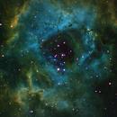 Rosette Nebula,                                Charlie Goldberg