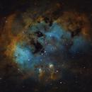 Tadpoles Nebula,                                Tommy Lease