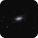 NGC 2903, the overlooked galaxy,                                Steven Bellavia