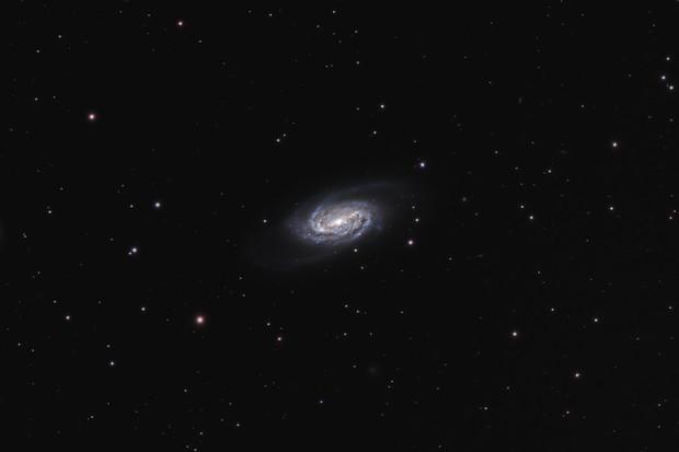 NGC 2903, the overlooked galaxy,                                Steven Bellavia