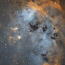 IC410 Tadpole nebula,                                Turki Alamri