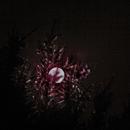 moon between trees,                                Thomas Ebert