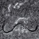 """Solar Filament """"moustache"""" ( 25.07.2021),                                jp-brahic"""