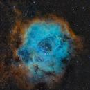 Caldwell 49 Rosette Nebula (SHO),                                Rajeev