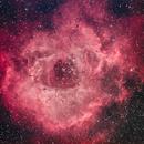 Rosette Nebula (NGC 2237),                                Blackstar60