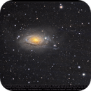 Sunflower Galaxy,                                Andre van Zegveld