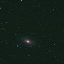 M81-M82,                                Midnight