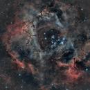 NGC2238 Nebuleuse de la Rosette,                                Joel85