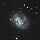 NGC4395 LRGB + LeXtreme,                                John Favalessa