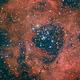 Rosette Nebula / C49,                                Michi Scheidegger