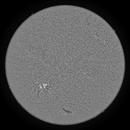 2020.06.08 Sun Full Disk H-Alpha,                                Vladimir