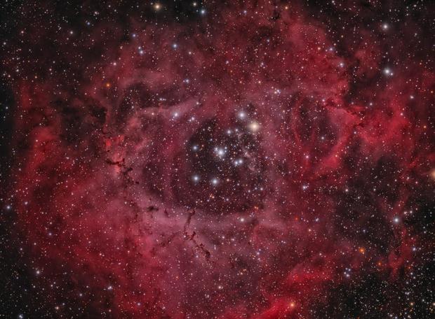 NGC 2238: The Rosette Nebula,                                Glenn Diekmann