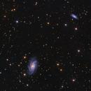NGC 2336,                                Firas Haki