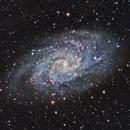 M33 LRGB WIP,                                Astrovetteman