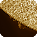 Solar chromosphere and prominence 20200405,                                Sergio Alessandrelli