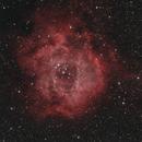 The Rosette nebula,                                Aaron