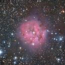The Cocoon Nebula,                                Gabe Shaughnessy