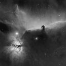 Horsehead and Flame Nebulas in Ha,                                Tim Polk