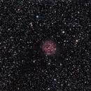 NGC 5146 - Cocoon Nebula,                                José Miranda