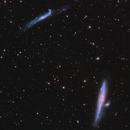 Whale and Hockey Stick Galaxies~NGC4631 & NGC4656,                                Fluorine Zhu