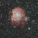 NGC 2174  Monkey Head Nebula,                                Ray Heinle