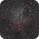 Elephant Trunk Nebula (IC1396),                                Mark Bowles