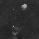 A Jellyfish and a Monkey Head,                                NewfieStargazer