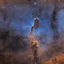 Elefant Trunk - IC 1396A,                                pmneo