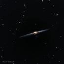 NGC 4565 - Needle Galaxy,                                David Schlaudt