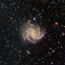 Fireworks Galaxy (NGC 6946) - LRGB,                                dswtan