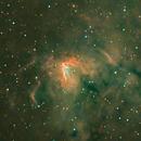 LRGB NGC 1491,                                Bob Scott